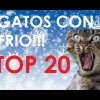 TOP 20 Gatos con frio!