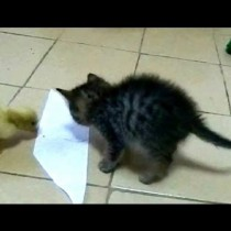Gatito y Patito VS Papel adhesivo