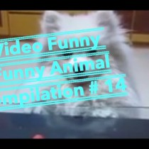Video Funny Comedy 2015 - Funny Animal compilation # 14