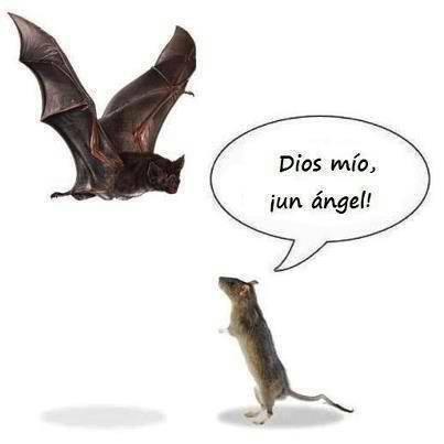 Un ángel visto por un ratón