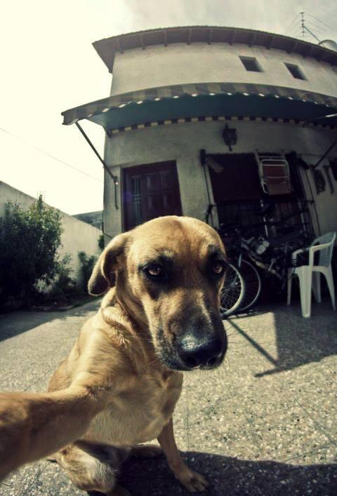 Autofoto de un perro