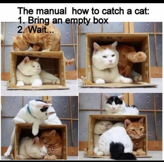 Cómo cazar un gato