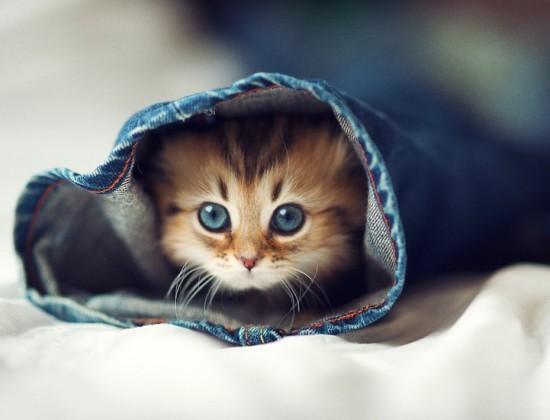 Daisy, el gato más fotogénico del mundo