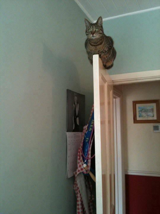 Gato de incógnito