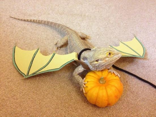 Mascota disfrazada para Halloween