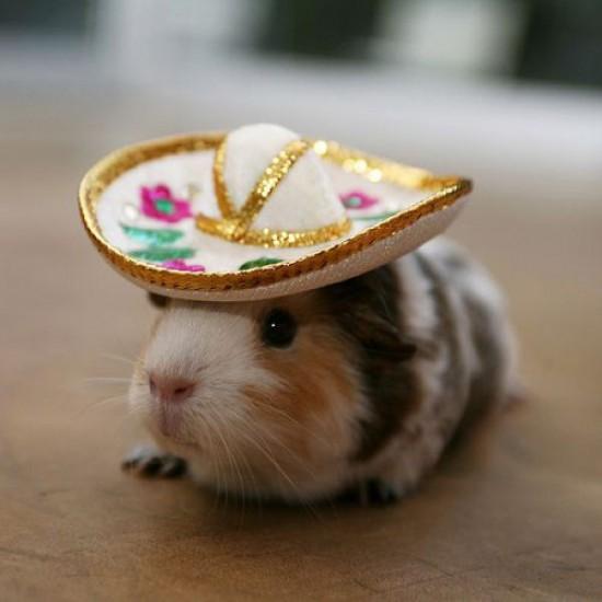 Hamster mexicano