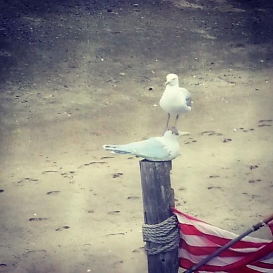 Una paloma a otra: Excuse me!