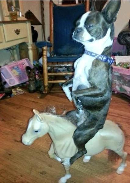 Perro montando a caballo