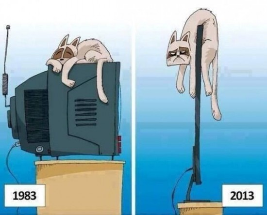 ¿Cómo ven los animales el progreso?
