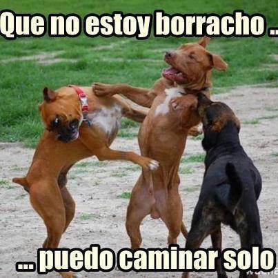Perros borrachos