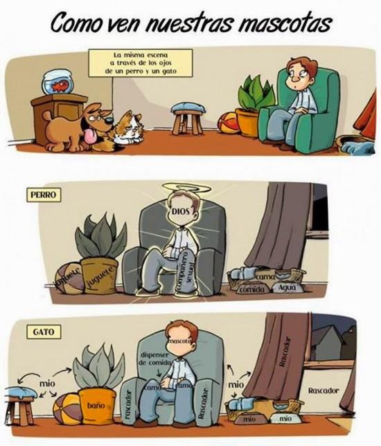Cómo nos ven las mascotas
