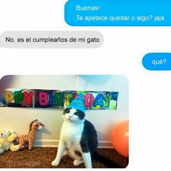 Cumpleaños del gato