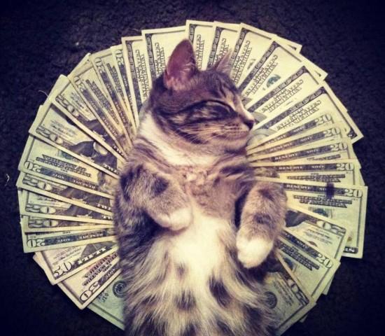 Gatos amantes del dinero