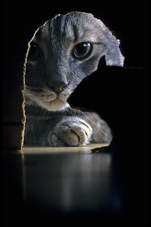 Gato persiguiendo al ratón