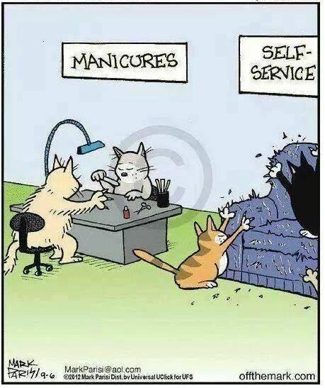Manicura para gatos