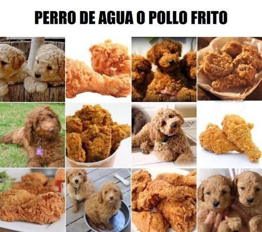 ¿Perro o pollo frito?