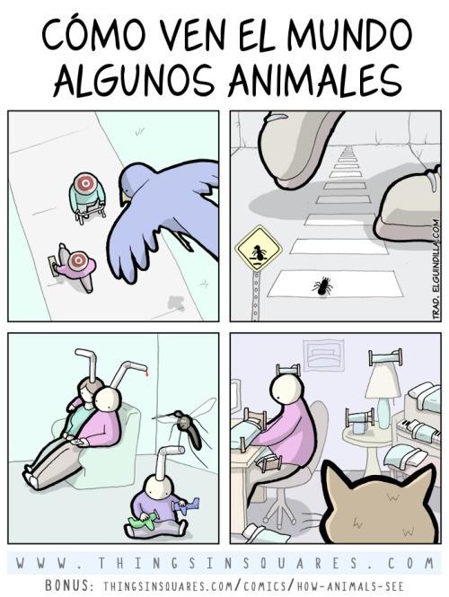 ¿Cómo ven el mundo algunos animales?