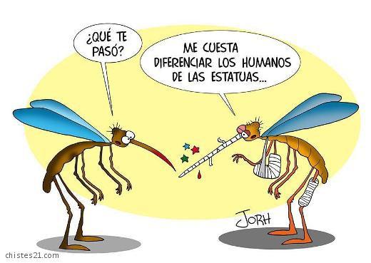Insectos con problemas de vista