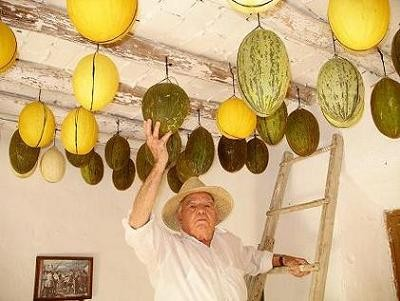 La máquina de recoger melones