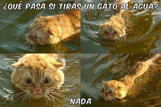 ¿Que sucede si tirás un gato al agua?