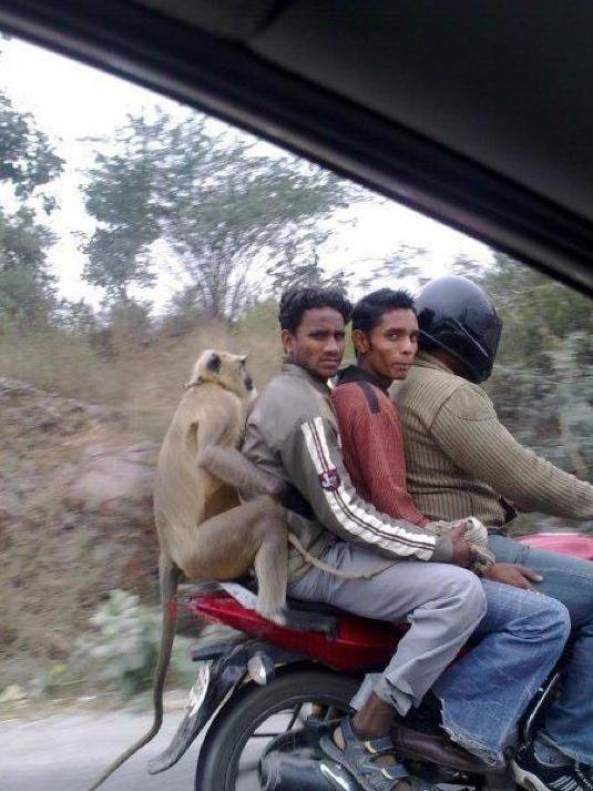 Viajando en moto por la India