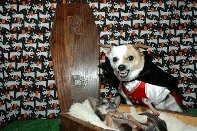 Disfraces divertidos de halloween