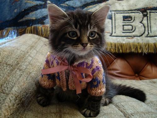 Gatito con jersey