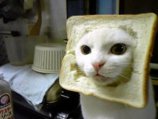 El gato molde