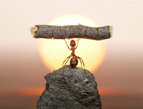 Hormiga celebrando la puesta de sol