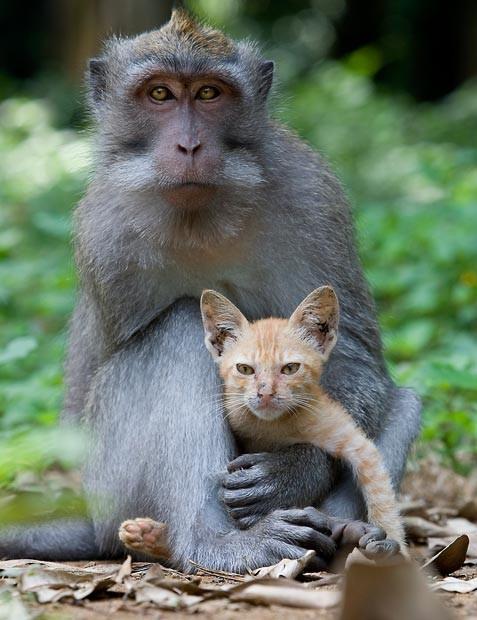 Mono adopta gato