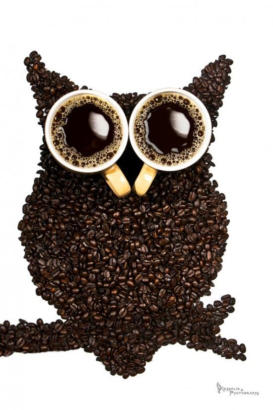 Buho en el café