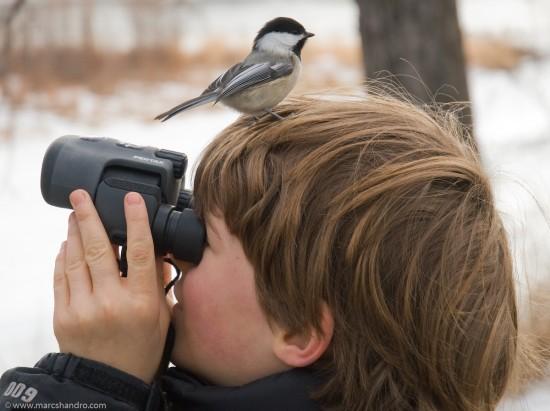 Experto en observaci�n de aves