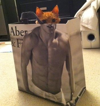 Gato con abdominales