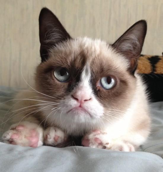 Gato con mala cara