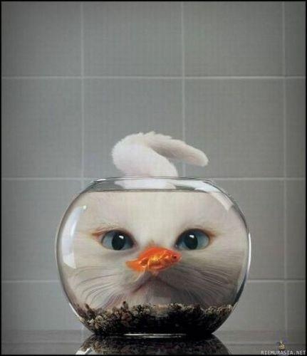 Gato en la pecera