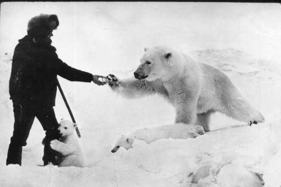 Jugando con osos polares