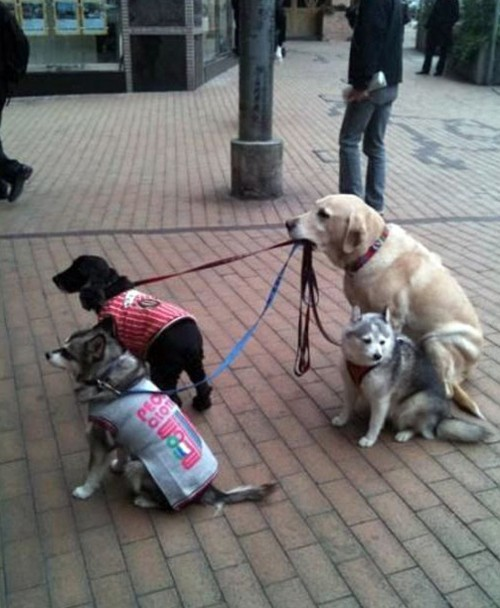El mejor paseador de perros