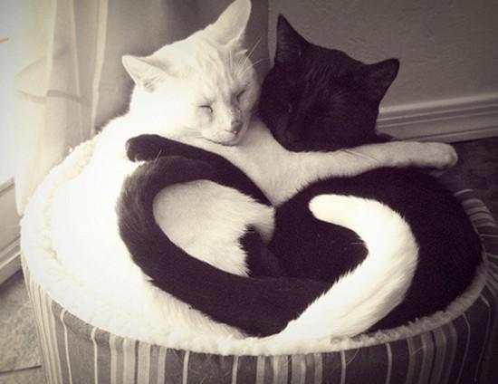 El Ying y el Yang de los gatos