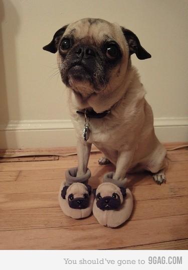 Perro con zapatillas de casa personalizadas