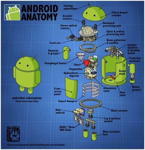 Android por dentro