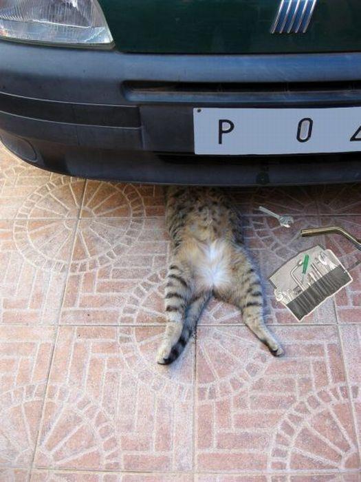 Para arreglar el coche usa el gato