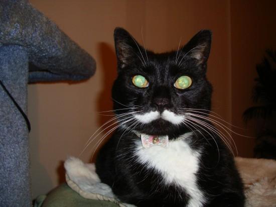 Gato con bigote