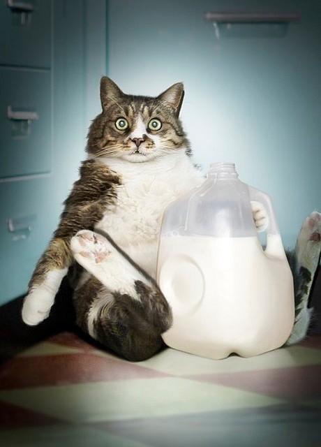 Gato pillado haciendo botell�n