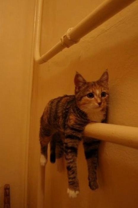 Gato Toalla