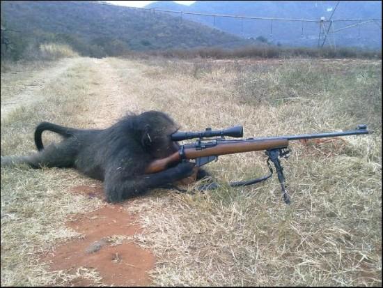 Mono cazando