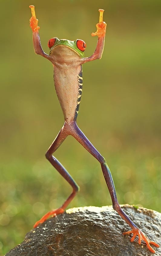 La rana mas chula del mundo