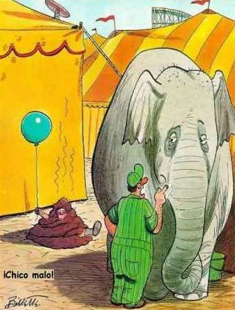 Elefante malo!