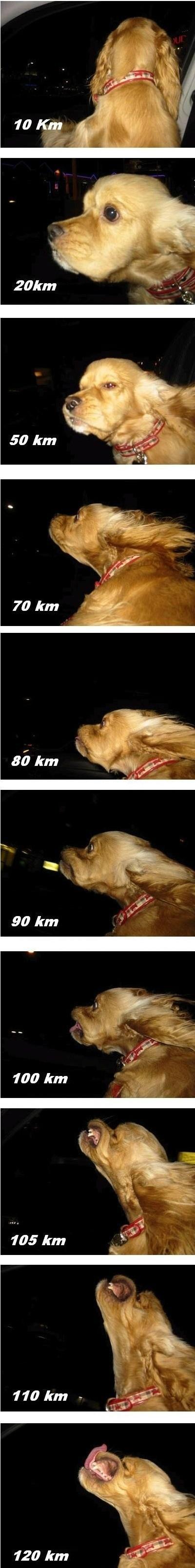 Cara de perro según la velocidad