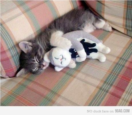 Catception - Inception de gatos