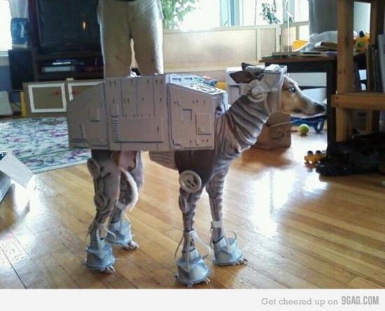 El mejor disfraz para un perro. Disfraz de Star Wars